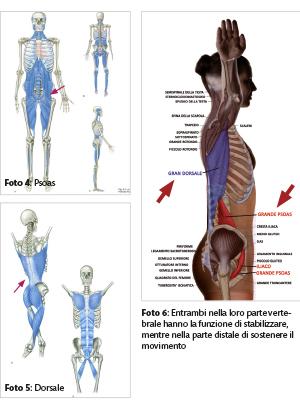 valbonesi anatomia2