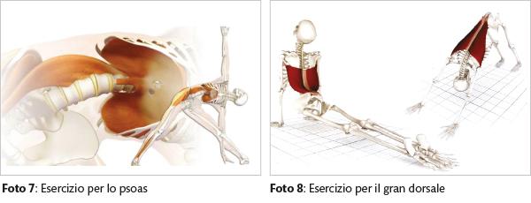 valbonesi anatomia7